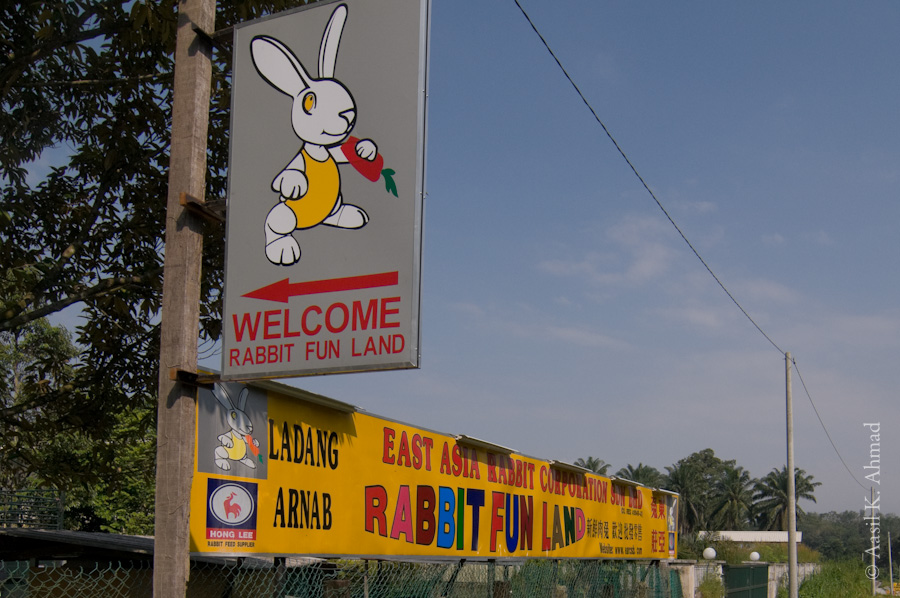 Not sure what Rabbit Fun land is.